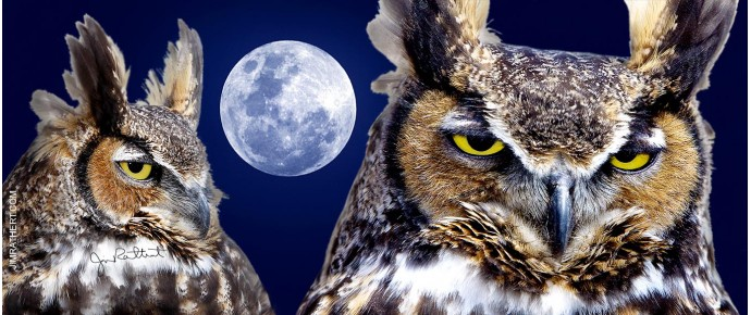 Great horned owls with moon