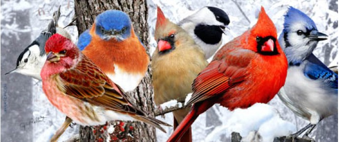 Colorful birds in snow