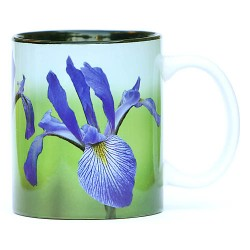 Southern blue flag irises