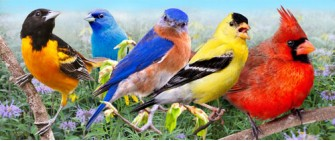 Colorful summer birds in morning meadow